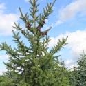 weihnachtsbaum4